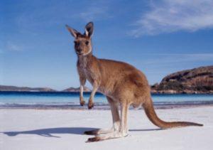 western-australia-kangaroo-beach-e1340539505117