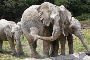 mexico-baby-elephants.jpeg2-1280x960_600_400_-1520156784