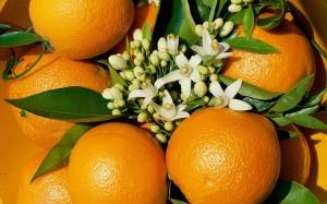 - Appetizing Fruits Wallpaper wallpapersfreak.blogspot.com (40)