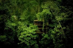 Finca-Bellavista-Treehouse-Vacation-–-Costa-Rica