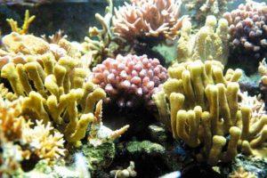 coral_imagen_07