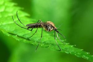 oprysk_na_komary2