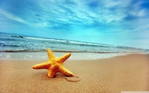 starfish-on-the-beach-2182