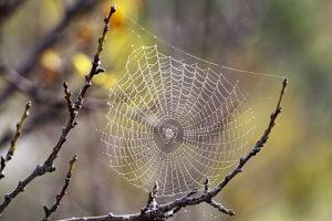inspiration-spiderweb-02