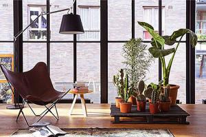 110509_indoor_plants2_197223657