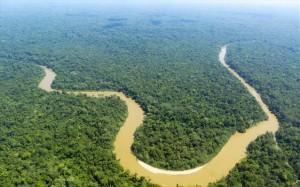 amazonios-tropiko-dasos