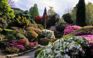 Colorful rhododendrons and azaleas in full bloom in the rock gardens at Leonardslee Gardens, West Sussex, UK