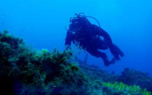 diving1_b